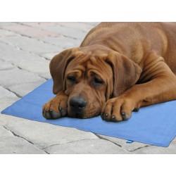 Chladící gelová podložka pro psy Cool GelPlus 30 x 40 cm
